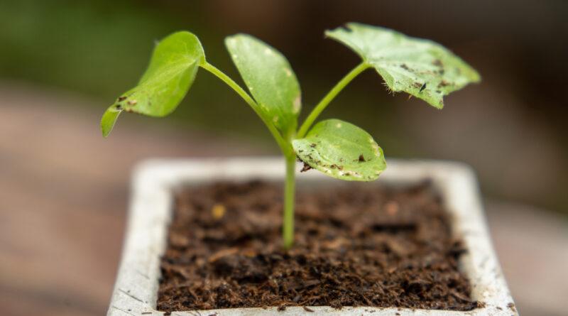 Plantenbak op poten voor buiten